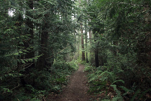 protect-chuckanut-communty-forest-100-acre-wood